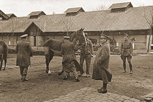 Remontedepot 1939 - enkele officieren aanschouwen een rijpaard.