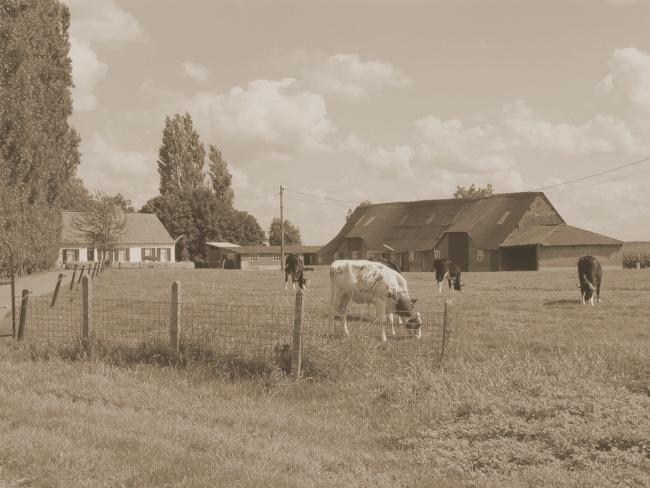 Het hoofdkwartier van het Vde Legerkorps vond op 19 mei onderdak in het Rijselhof te Kaprijke.